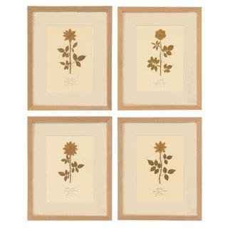 Framed Gilded Herbarium