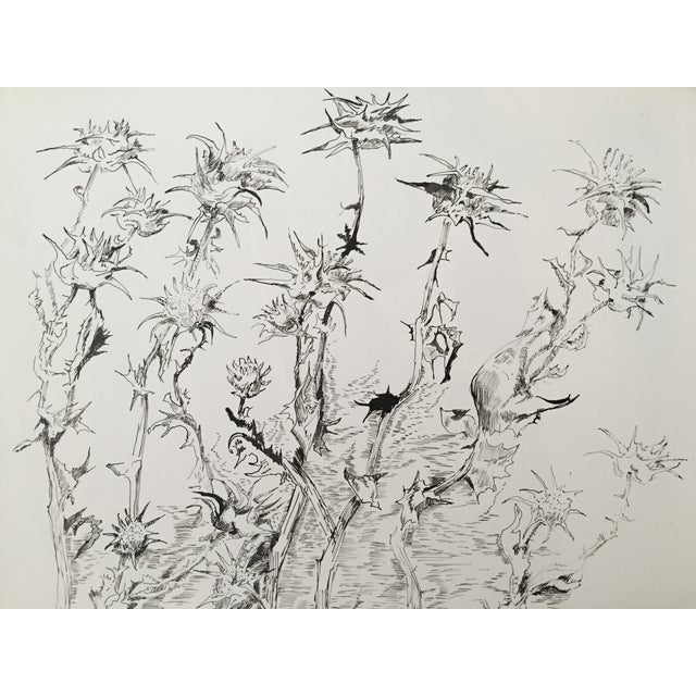 """""""Thistles"""", Pen & Ink by Roger Stokes - Image 1 of 4"""