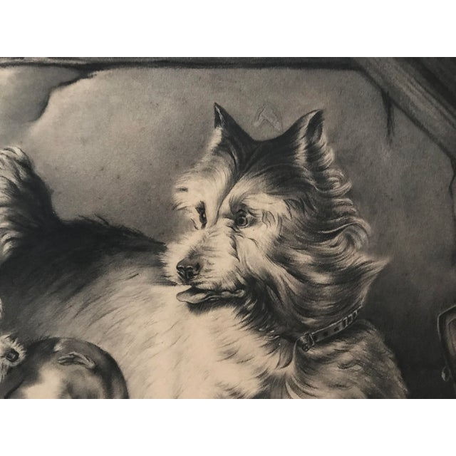 Antique Charcoal Drawing of Terriers For Sale - Image 4 of 5