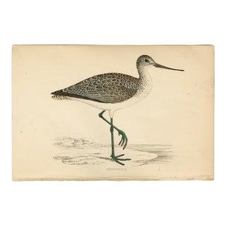 """Greenshank"", 19th Century Woodblock Engraving For Sale"