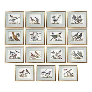Framed Hand Colored Engravings of Birds by Francois N Martinet - 15 Pieces For Sale
