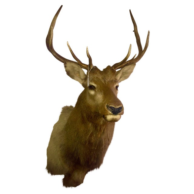 Rocky Mountain Elk Taxidermy Mount - Image 1 of 6