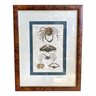 Antique 18th C Engraving W Insect Spiders by Trowbridge Gallery For Sale