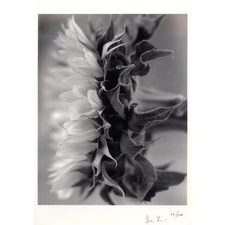 """Sunflower"" Photograph Toned Laser Print by Susan Salinger, 1992 For Sale"