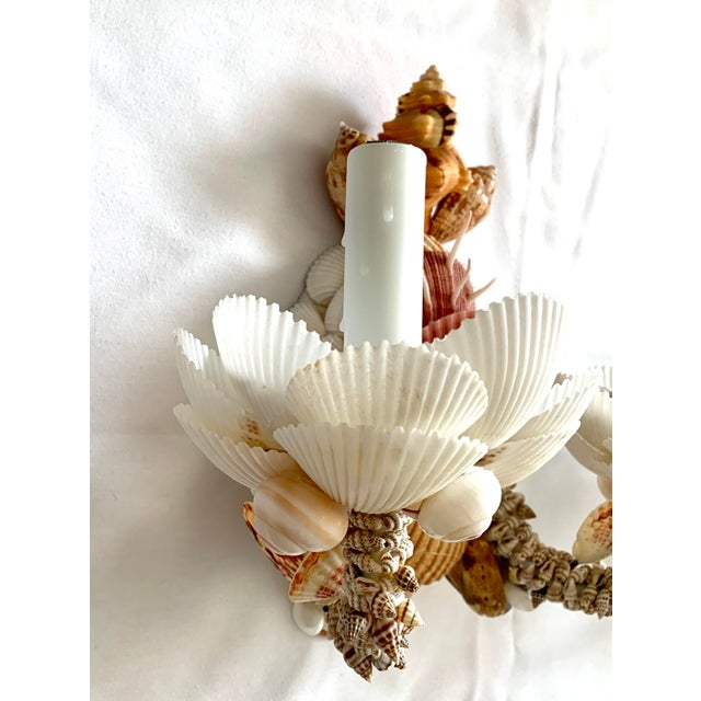 Christa's South Seashells Neutral Two-Light Shell Sconces - a Pair For Sale - Image 4 of 7