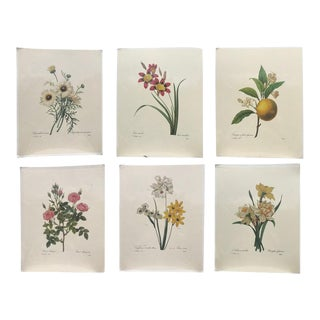 Vintage Botanical Scientific Renderings Prints – Set of 6
