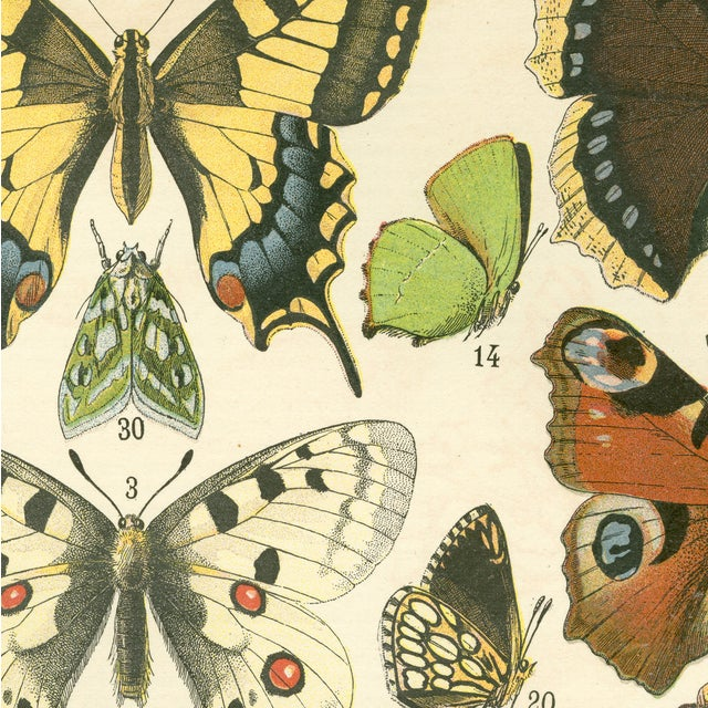 French Vintage Papillons Archival Print For Sale - Image 3 of 4