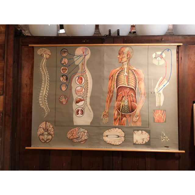 1960s Vintage Hagemann for Denoyer-Geppert German Human Nervous System Pull-Down Chart For Sale - Image 10 of 10