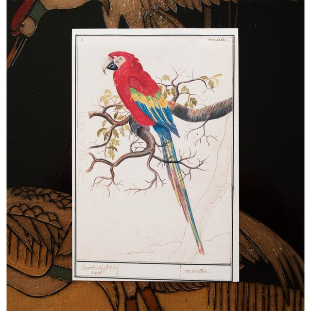 """1590s Small """"Scarlet Macaw"""" Print by Anselmus De Boodt For Sale - Image 4 of 7"""