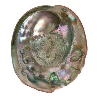 Vintage Large Natural Abalone Shell