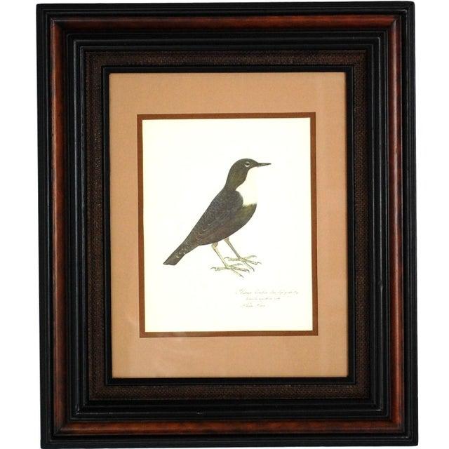 Vintage Framed Bird Prints - Set of 3 - Image 3 of 10