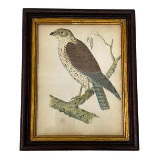 "Martha Macy ""Hawk"" Original Watercolor C.1930s For Sale"