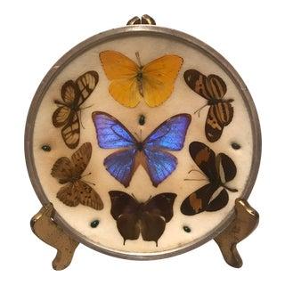 Vintage Framed Real Butterfly & Beetle Specimens Plate & Display For Sale