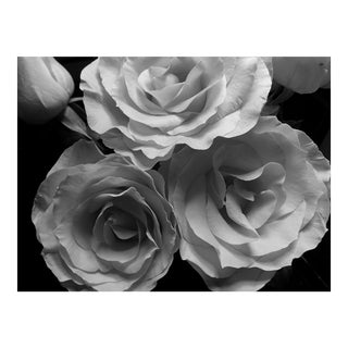 Louise Weinberg Blooming Roses in Black & White Original Photograph For Sale