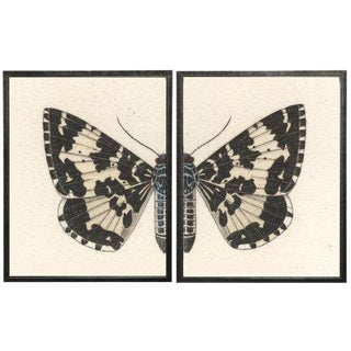 "Split Black and White Butterfly - 38"" X 25"" For Sale"