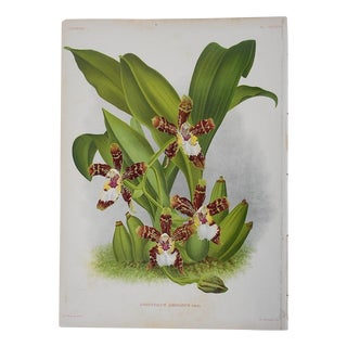 Orchid Lithograph For Sale