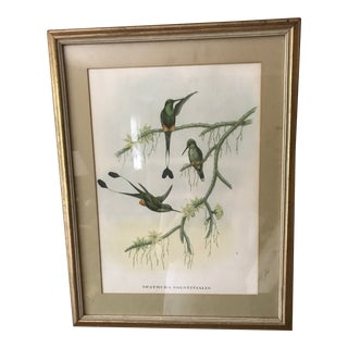 """""""Spathura Solstitlalis"""" Hand Colored J. Gould Hummingbirds Lithograph Print For Sale"""