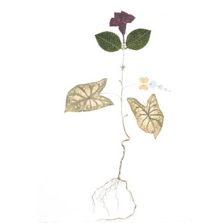 Mandeville Oak watercolor, fabric, pressed foliage on paper by Marilla Palmer For Sale