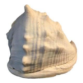 1970s Conch White Shell