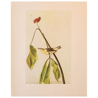 1960s Vintage Louisiana Water Thrush Cottage Print by Audubon For Sale