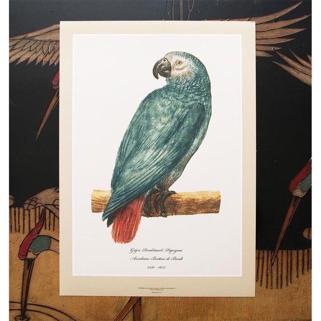 XL 1590s Contemporary Prints of Anselmus Boëtius De Boodt Parrots - Set of 6 For Sale - Image 4 of 9