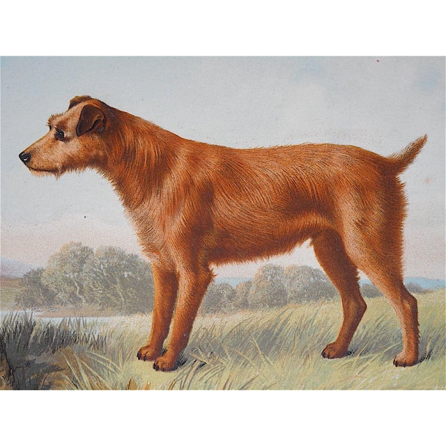Antique Dog Lithograph - Irish Terrier - Image 3 of 3