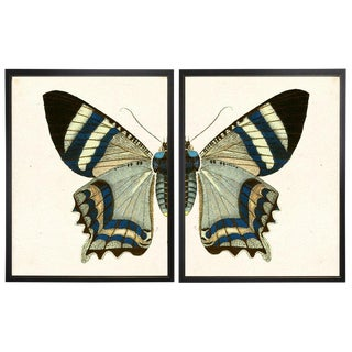 Split White & Blue Butterfly Prints in Copper & Black Shadowboxes 38ʺ × 25ʺ - a Pair