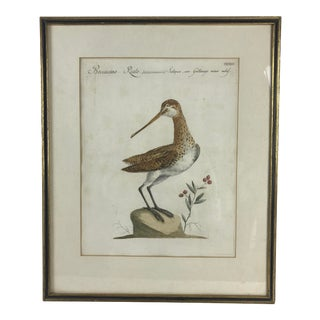 18th Century Snipe Bird Print Hand Colored Engraving by Saverio Manetti For Sale