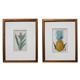 An Exotic Pair of Hand-Colored Pineapple Engravings For Sale