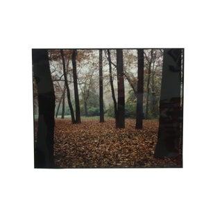 "1994 David Morowitz ""An Autumn Scene"" Original Photograph For Sale"