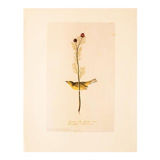 1960s Cottage Lithograph of Louisiana Fly Catcher by Audubon For Sale