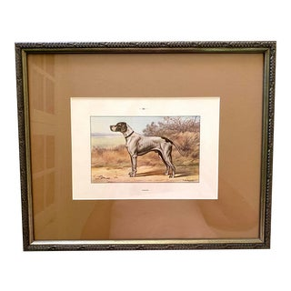 """1930s French Dog Chromolithograph. """"Pointer"""", From """"Les Chiens De Chasse"""" For Sale"""