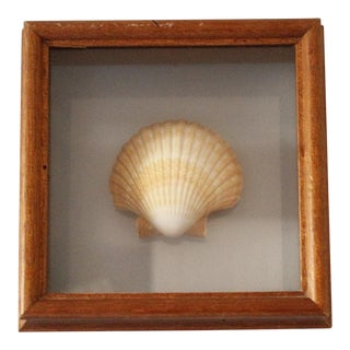 Vintage Shell Shadow Box Wall Hanging Wood Framed Beach Decor For Sale
