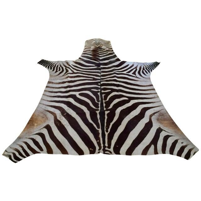 African Burchell Zebra Skin Rug - 5′10″ × 8′9″ - Image 1 of 4