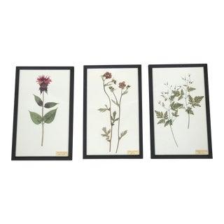 Vintage Swedish Botanicals