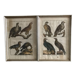 Early French Hand-Colored Engravings by Benard Direxit - a Pair For Sale