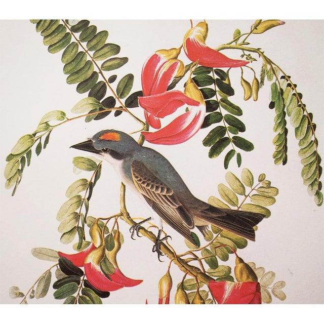 American 1966 Gray Kingbird by John James Audubon For Sale - Image 3 of 10