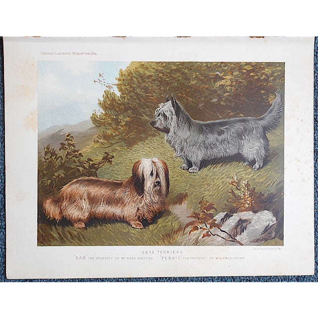 """Antique Dog Lithograph """"Skye Terriers"""" - Image 3 of 3"""