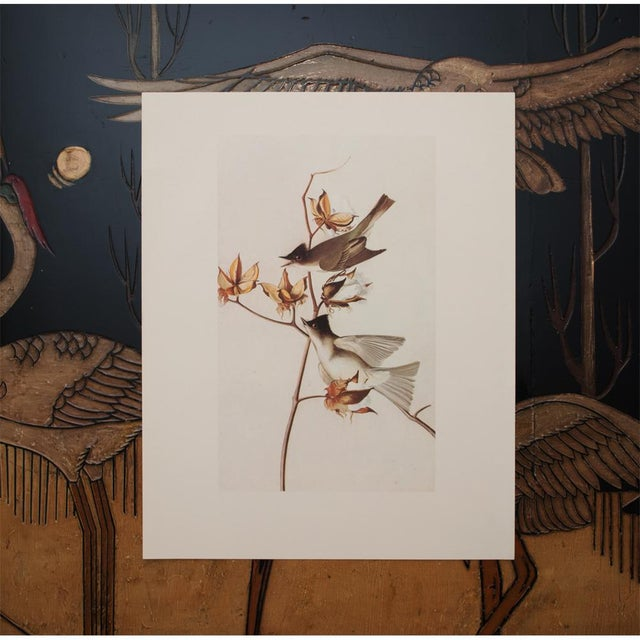 1960s Cottage Style Lithograph of an Eastern Phoebe by Audubon For Sale In Dallas - Image 6 of 9