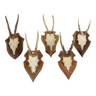 Vintage German Roe Deer Antlers - Set of 5 For Sale