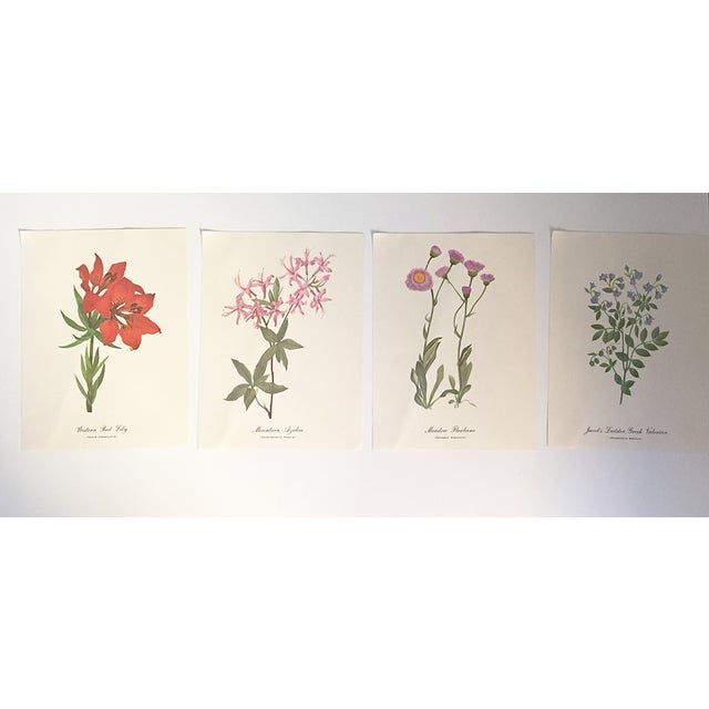 Western Red Lily Botanical Print - Image 4 of 4
