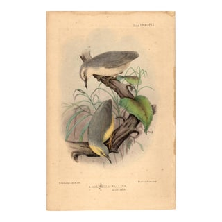 Limited Edition Bird Lithograph Original Hand-Colored and Pencil, Signed For Sale