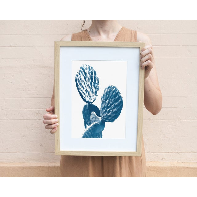 This is an image from our Autumn 2017 collection of a succulent cactus. It is an original cyanotype print, made on heavy...