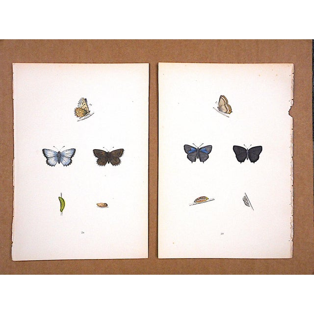 Beautifully printed 19th century lithograph with period hand coloring depicting butterflies. From History Of British...