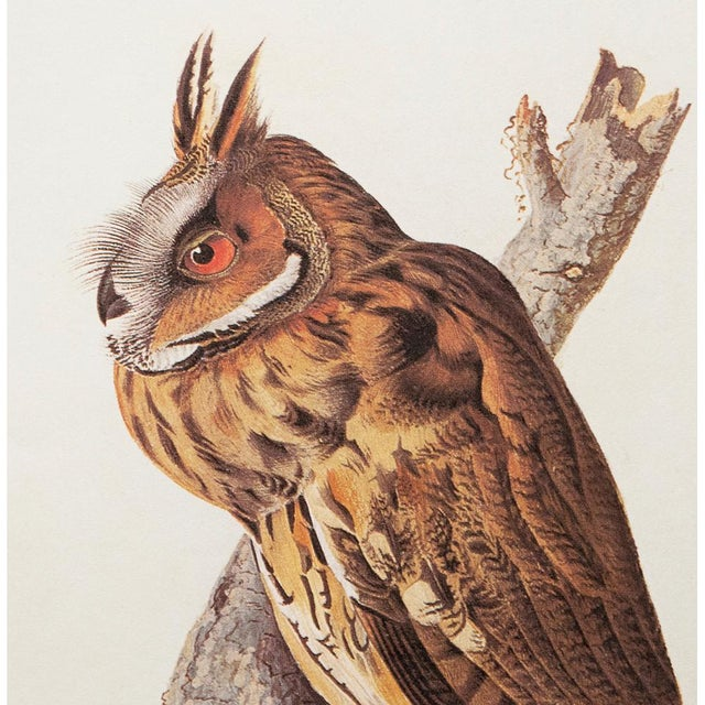 Stunning Long-Eared Owl by John J. Audubon, Vintage Cottage Print For Sale In Dallas - Image 6 of 10