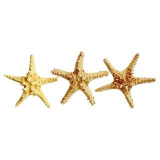 Vintage Large Tan/Gold Knobby Starfish - Set of 3