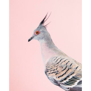 """Contemporary Limited Edition Crested Pigeon Print (20x24"""") by Brendan Burden For Sale"""