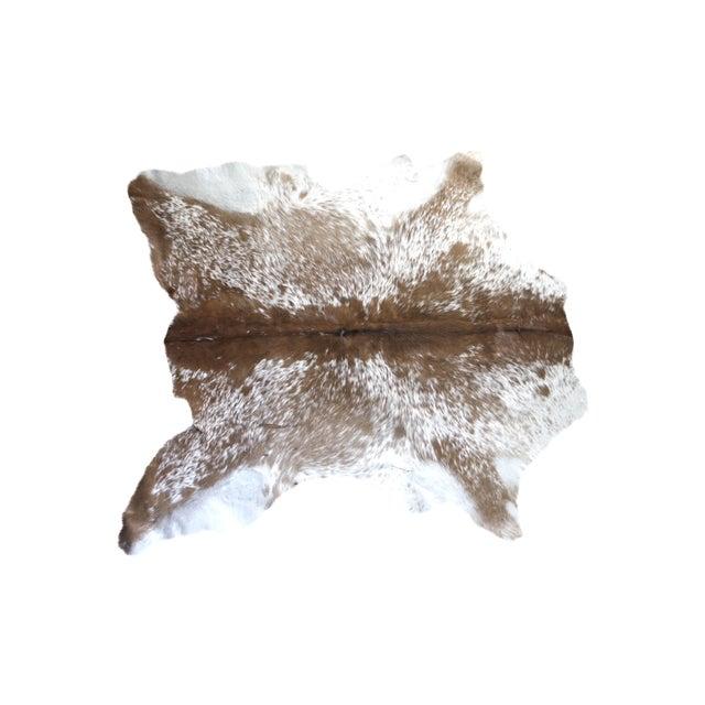 "Small Brazilian Fawn Calf Hide Rug - 3'1"" X 3'6"" - Image 1 of 4"
