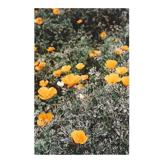 """Poppies"" Original Framed Photograph"
