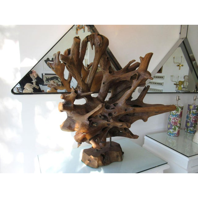 Mid 20th Century Mid-Century Modern Petrified Organic Wood Sculpture For Sale - Image 5 of 6